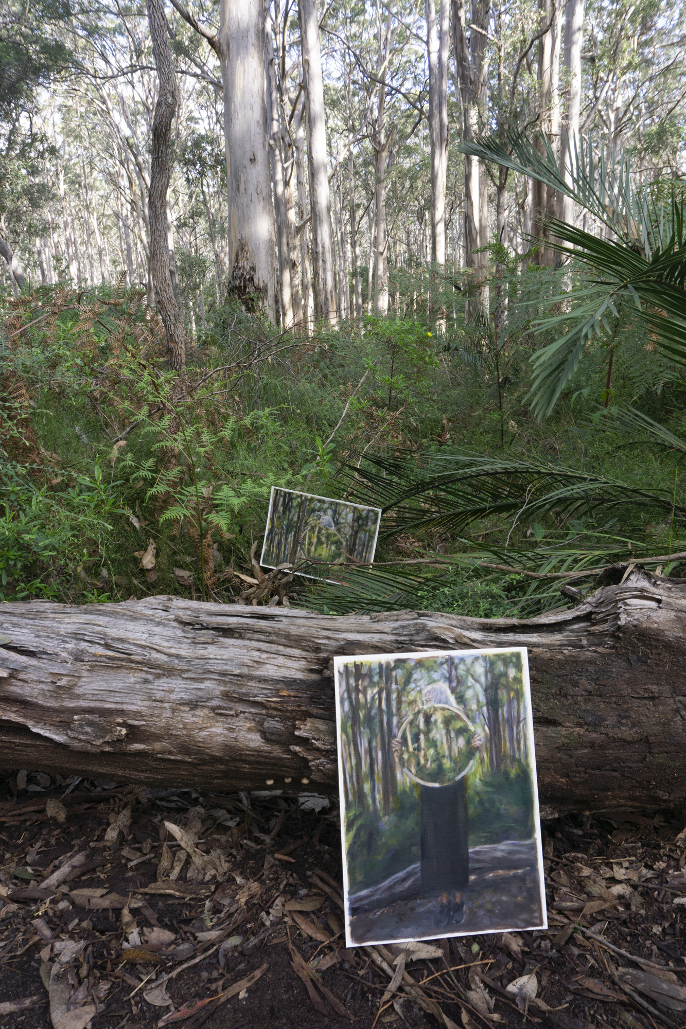 Boranup Forest 5