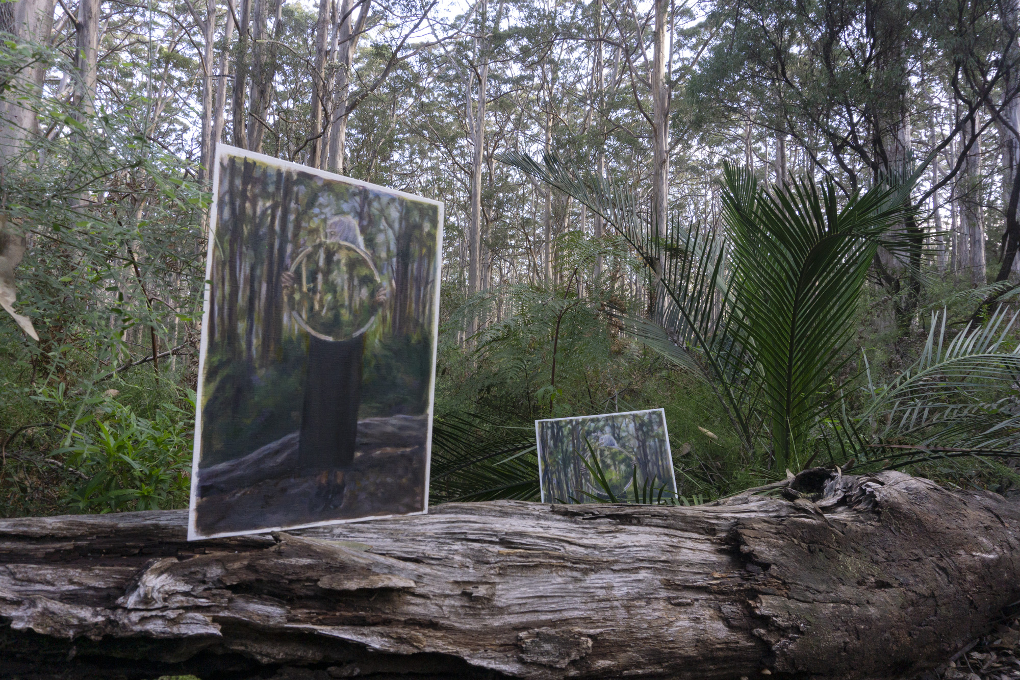 Boranup Forest 7